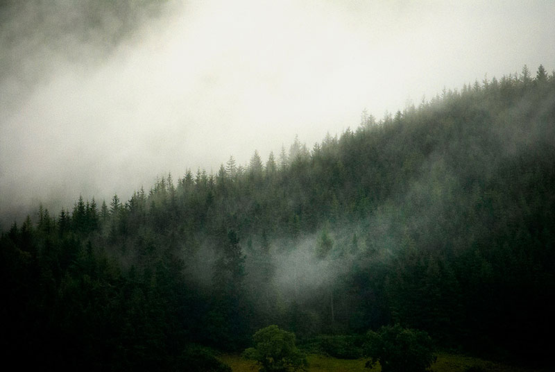 Trees in the Lakes 1