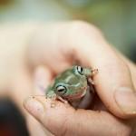 frog_DSC2744